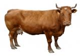 구제역(FMD) 백신 접종…소‧염소 3만여 두 대상