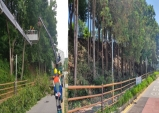 아산 송곡초 인근 숲, 안전하고 쾌적하게 '정비 완료'