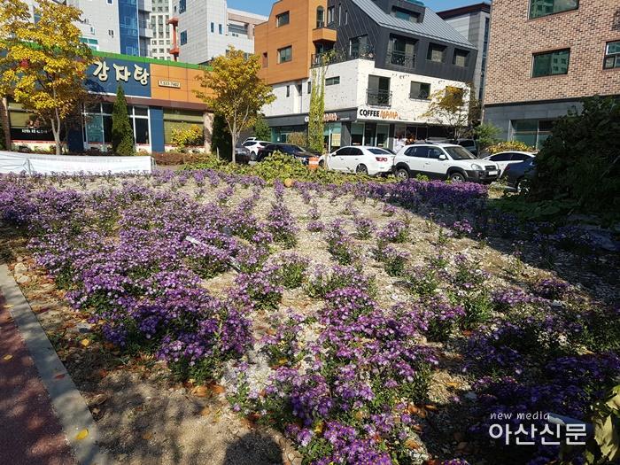 3. 탕정면, 지중해마을 꽃밭 조성.jpg
